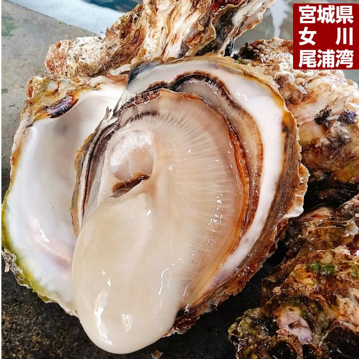 岩牡蠣販売開始